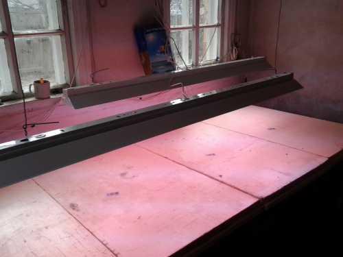 При создании фито светильников конструкторы не оставили без внимания светодиоды