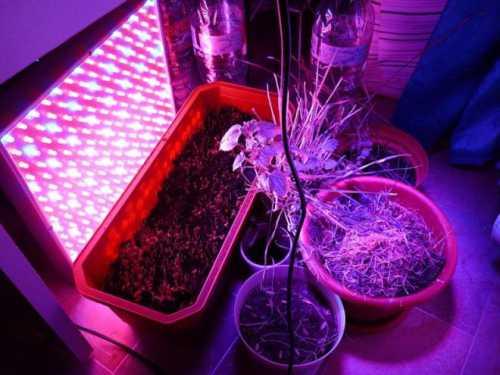 Поэтому индукционные лампы можно использовать, не комбинируя с другими источниками фитосвета