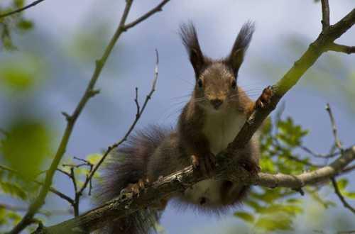 Определенное значение при толковании сновидений имеет тот факт, довелось ли наблюдать за белкой, сидящей на дереве или же посчастливилось держать ее в руках