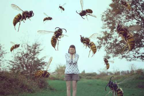 К чему снятся комары: толкование сна в котором