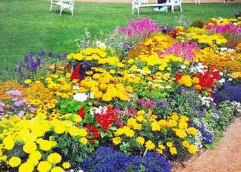 Выбор растений для цветников как выбрать садовые цветы