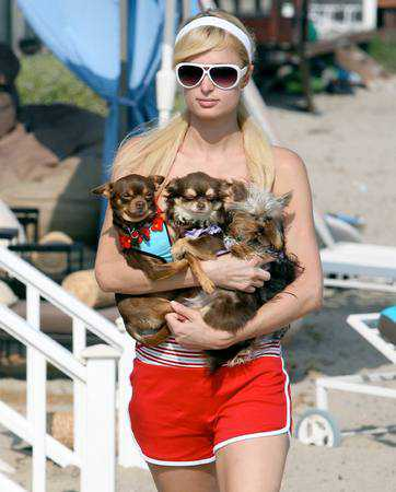 Мода на маленьких собачек: откуда