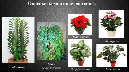 Комнатные растения: полезные и опасные для дома