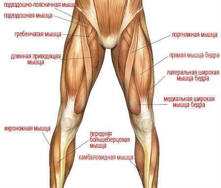 Если отвести бедро в сторону, заболит двуглавая мышца