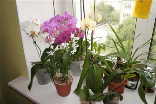5 способов заставить цвести орхидею