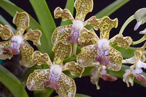Например, если цветок был только посажен, то первые цветки можно ожидать только через года