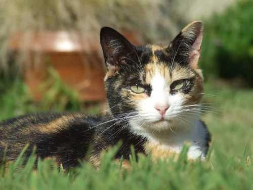 Инкубационный период при любых инвазиях у кошек всегда короче, чем у людей ввиду небольших размеров животного и его