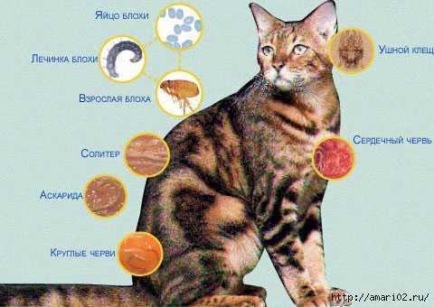 У беременных кошек происходят выкидыши и преждевременные роды